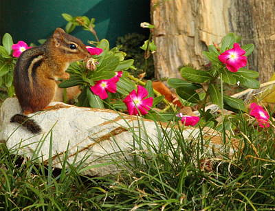 Flower Photograph - Chipper Chipmunk by Andrew McInnes