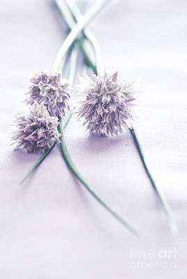 Chives Photograph - Chives by HD Connelly