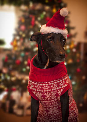 Christmas Dressed Up Dog Print by Malcolm Smith