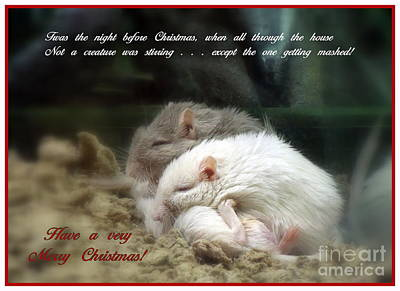 Gerbil Photograph - Christmas Gerbils by Renee Trenholm