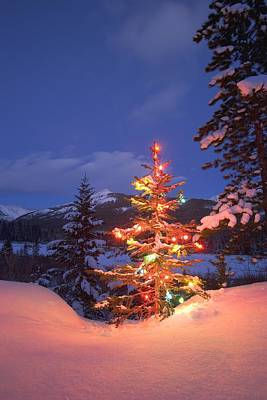 Christmas Tree Outdoors At Night Print by Carson Ganci