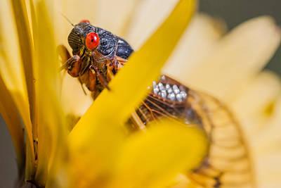 Cicada Photograph - Cicada IIi by Gene Hilton