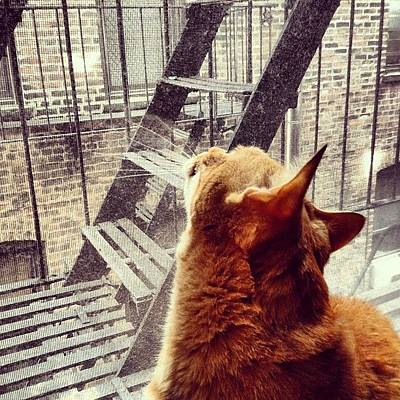 Cats Photograph - City Cat And Fire Escapes by Vivienne Gucwa