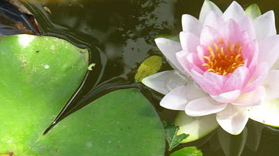 Close-up Lily Print by Debbie Finley