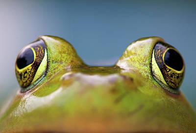 Bullfrog Photograph - Close-up Of American Bullfrog Eyes by Nick Harris Photography