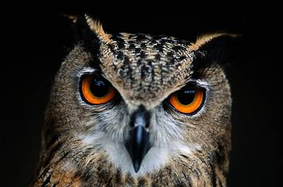 Close Up Of An African Eagle Owl Print by Joel Sartore