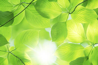 Close-up Of Fresh Green Leaves Print by Imagewerks