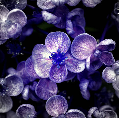 Large Group Of Objects Photograph - Close Up Of Purple Flowers by Sner3jp