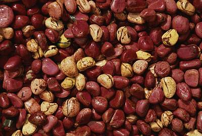 Sangha Photograph - Close View Of Cola Nuts by Bobby Model