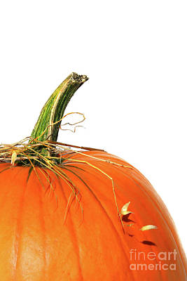Diet.eat Photograph - Closup Of Pumpkin With Bits Of Straw  by Sandra Cunningham