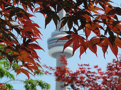 Cn Tower With Japanese Maple Print by Alfred Ng