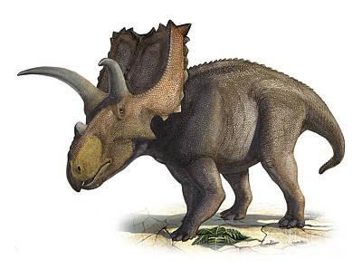 Coahuilaceratops Magnacuerna Print by Sergey Krasovskiy