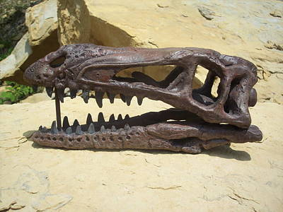 Coelophysis Skull Original by Dennis Kimberly