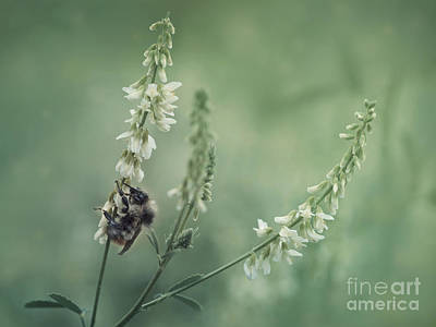 Bumblebees Photograph - Collecting The Summer by Priska Wettstein