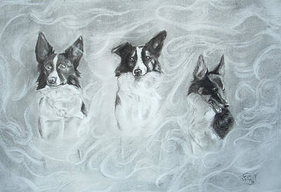 Collies In The Mist Print by C Nick