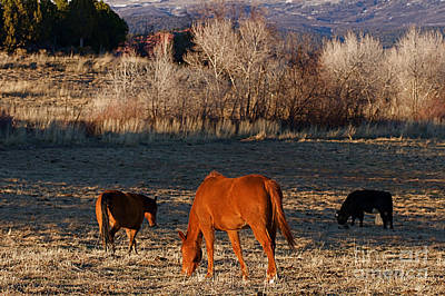 Autumn Photograph - Colorado Horse Ranch In The Meadows At Sunset Near The Rocky Mountains by ELITE IMAGE photography By Chad McDermott