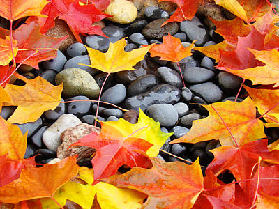 Colorful Autumn Leaves Prints Rocks Print by Baslee Troutman