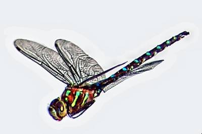 Wet Fly Digital Art - Colorful Dragon by Don Mann