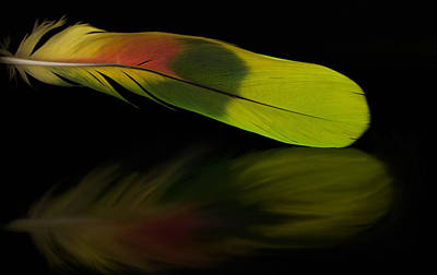 Photograph - Colorful Feather by Ivelina G