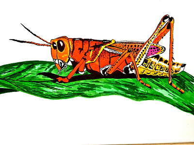 Grasshopper Drawing - Colorful Grasshopper by Erika Butterfly