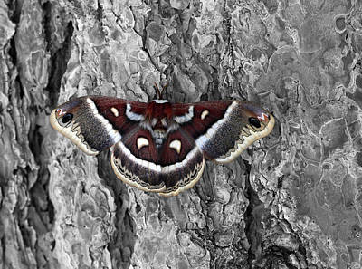 Colorful Moth Original by James Steele