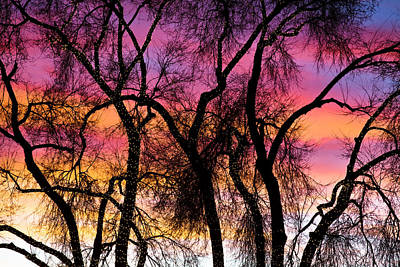 Colorful Silhouetted Trees 27 Print by James BO  Insogna
