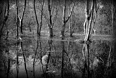 Colorless Serenity Print by Greg Palmer