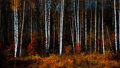 Colors Of Fall Print by Jenny Rainbow