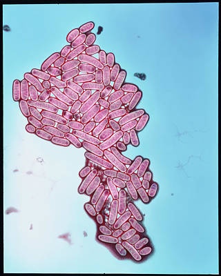 Coloured Tem Of Escherichia Coli Bacteria Print by Eddy Gray