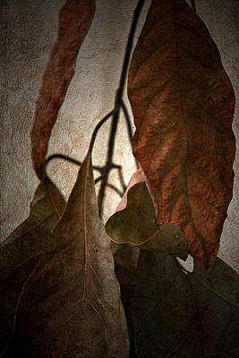 Earthtone Colored Art Photograph - Comfort by Bonnie Bruno