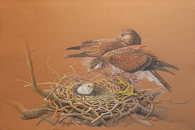Buzzard Drawing - Common Buzzard Pair by Deak Attila
