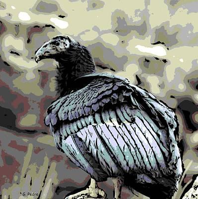 Condor Profile Print by George Pedro