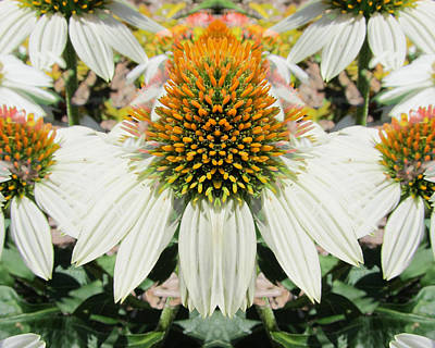 Abstracted Coneflowers Digital Art - Coneflowers by Michele Caporaso