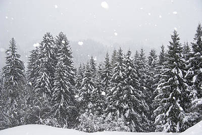 Coniferous Forest In Winter, Alps Print by Konrad Wothe