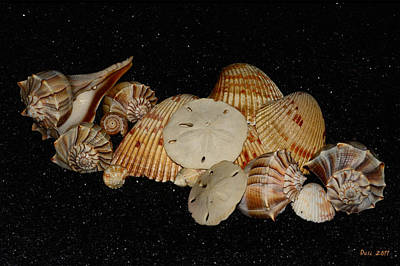 Constellation Sea Shells Original by Wayne Dusi