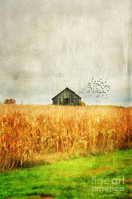 Corn Fields Of Kentucky Print by Darren Fisher
