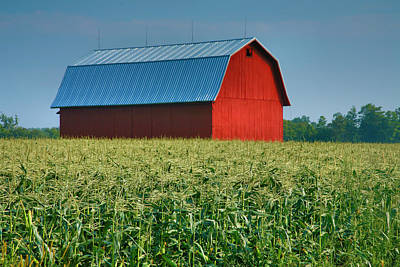 Cornfield And Red Barn Print by Steven Ainsworth