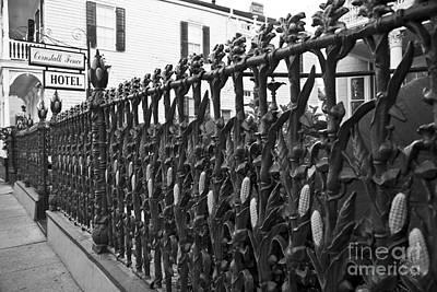 Leda Photograph - Cornstalk by Leslie Leda