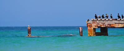 Cormorant Photograph - Cortez Beach by Betsy C Knapp