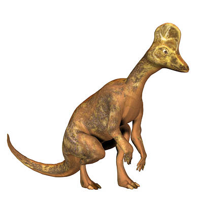 Corythosaurus Dinosaur Print by Friedrich Saurer