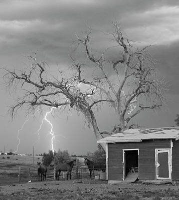 Country Horses Lightning Storm Ne Boulder County Co 66v Bw Print by James BO  Insogna