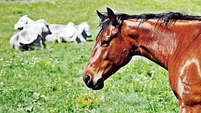 Ranch Photograph - Cow Horse by Monica Wheelus