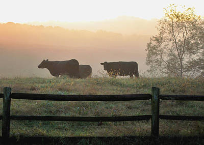 Farm Photograph - Cows In Morning Mist Dobbins Mill - 0960c2989d by Paul Lyndon Phillips