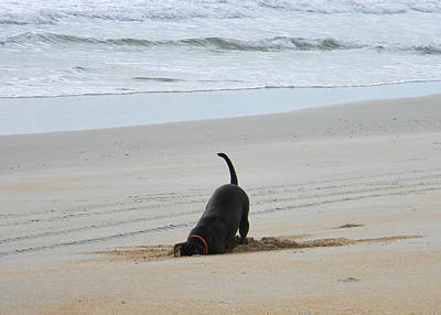 Dog At Beach Photograph - Crabbing by Christy Usilton