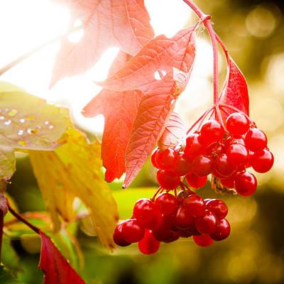 Cranberry Bliss Print by Matt Dobson