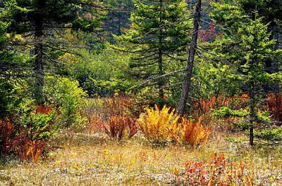 Cranberry Glades Autumn Print by Thomas R Fletcher