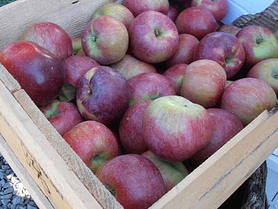 Crate Of Apples Print by Kimberly Perry