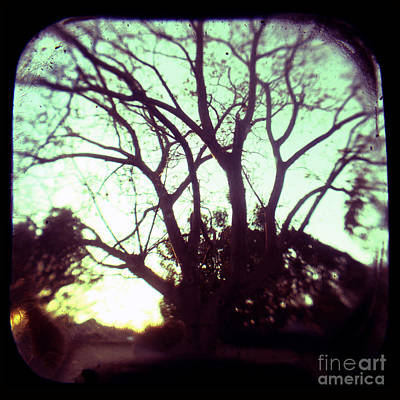 Photograph - Crepescule by Andrew Paranavitana