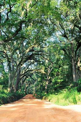 Georgia Plantation Photograph - Crossroads by Jan Amiss Photography
