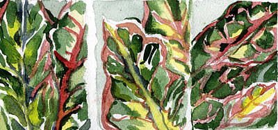 Crotons In Red And Green Print by Mindy Newman